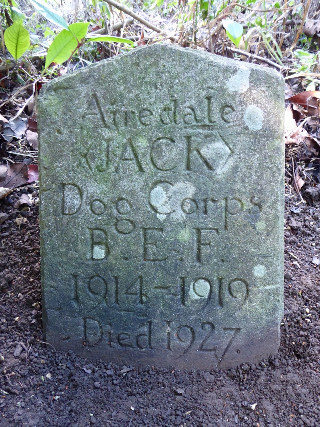 Jackthedoggrave